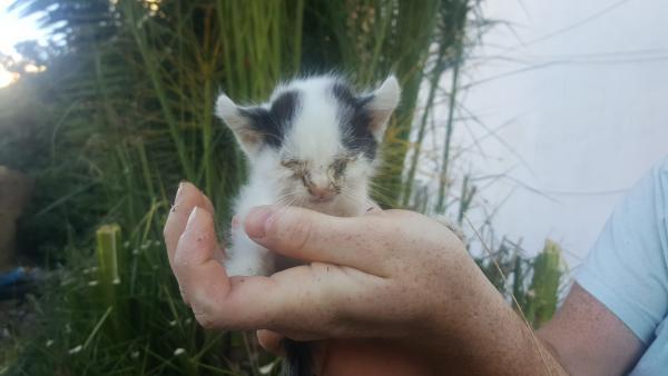 Una de las pequeñas, en un estado de desnutrición brutal. Con 100 gramos de peso