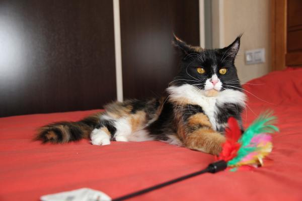 Romina jugando feliz mientras espera un hogar